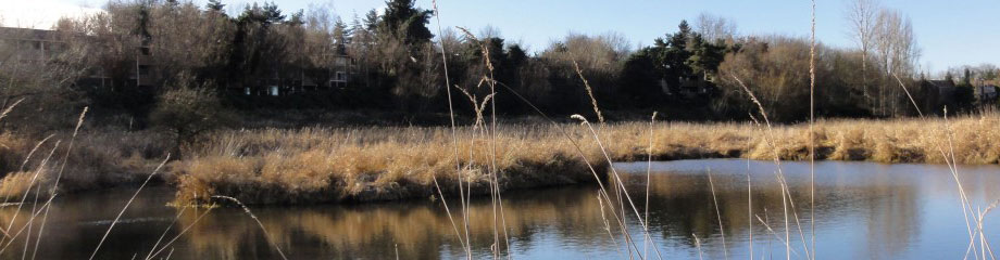 The Wetlands Conservancy wetland preserve