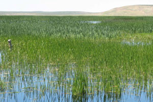 closed-lake-basin conservation plan