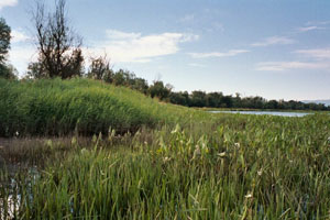 scappose-bay conservation plan