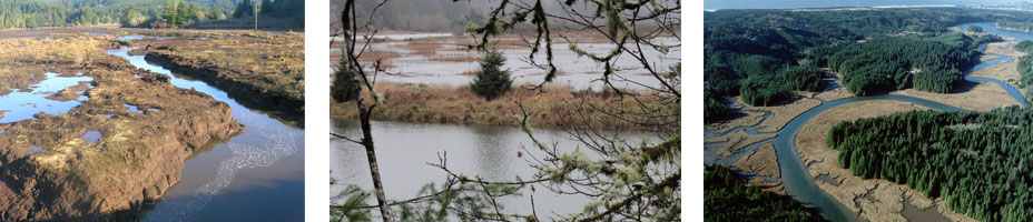 Oregon coastal wetlands