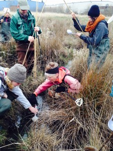 Surveyors searching for egg masses and getting ready to mark locations with bamboo poles.