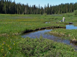 wet Meadows-60807131