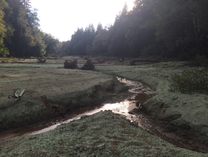 Non-natives removed, stream bed re-established