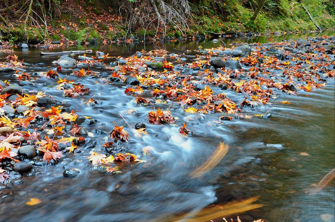 Sain Creek Fall Flow, Jared Kinnear