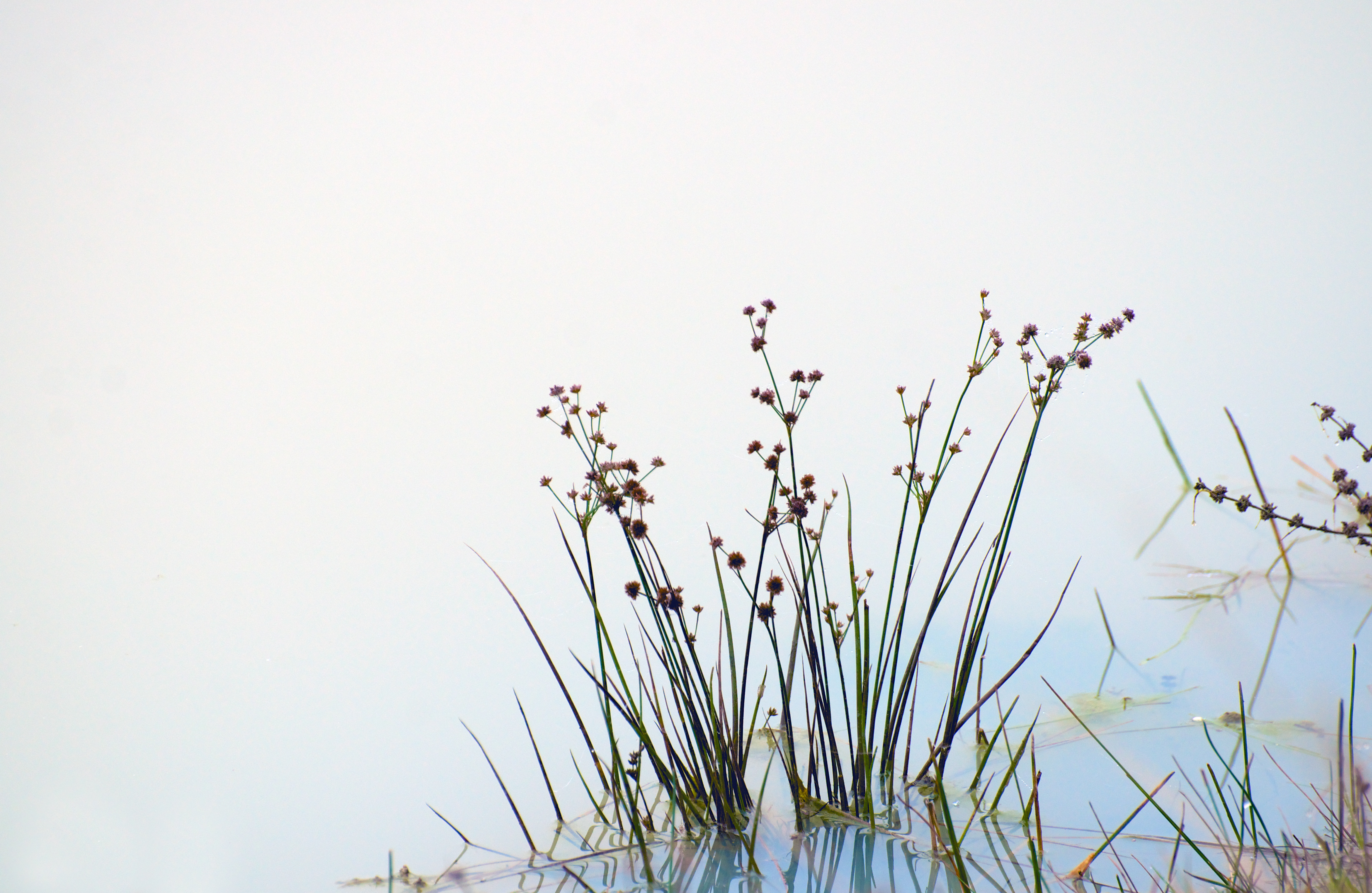 Weeds-with-Fog-and-Blue-Water, Russell Tomlin