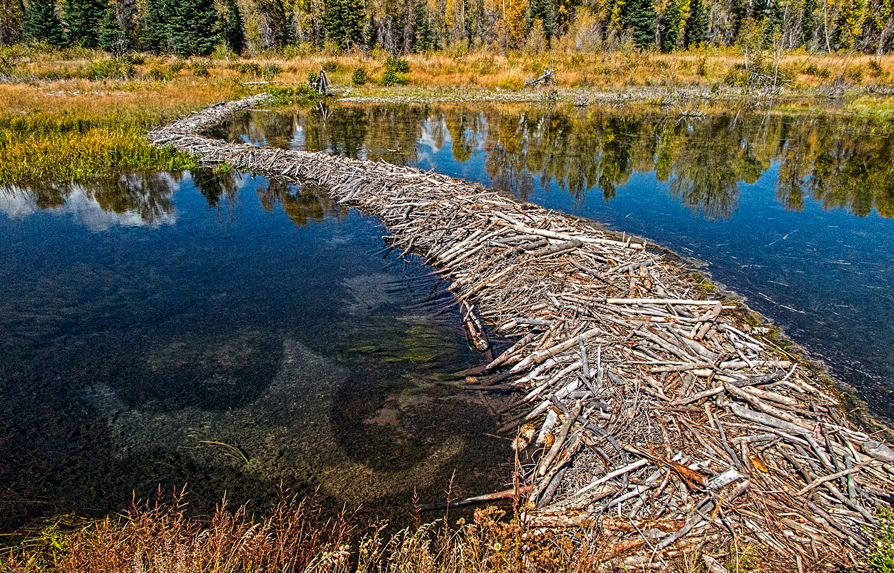 Beaver Dam in Teton Mountains