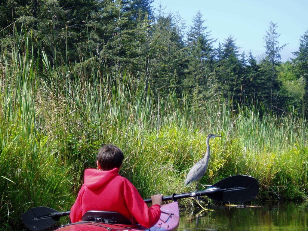 kid, kayak and blue heron