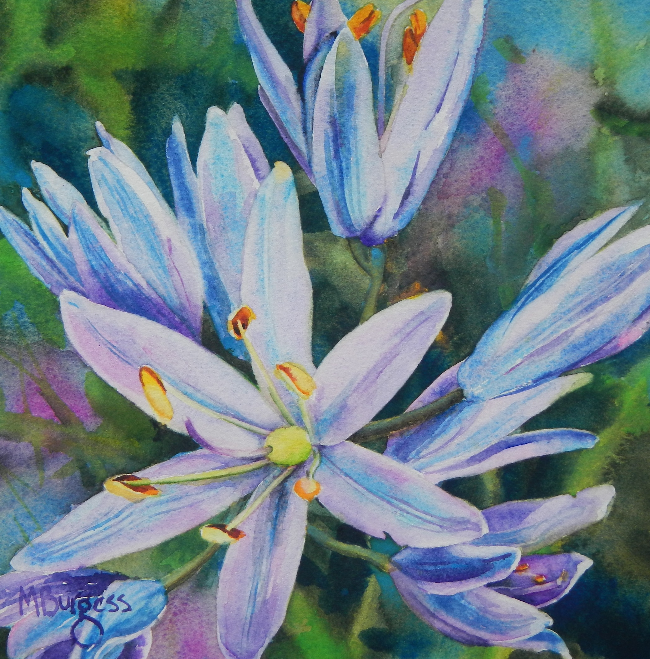 Burgess-Camassia Quamash-Watercolor