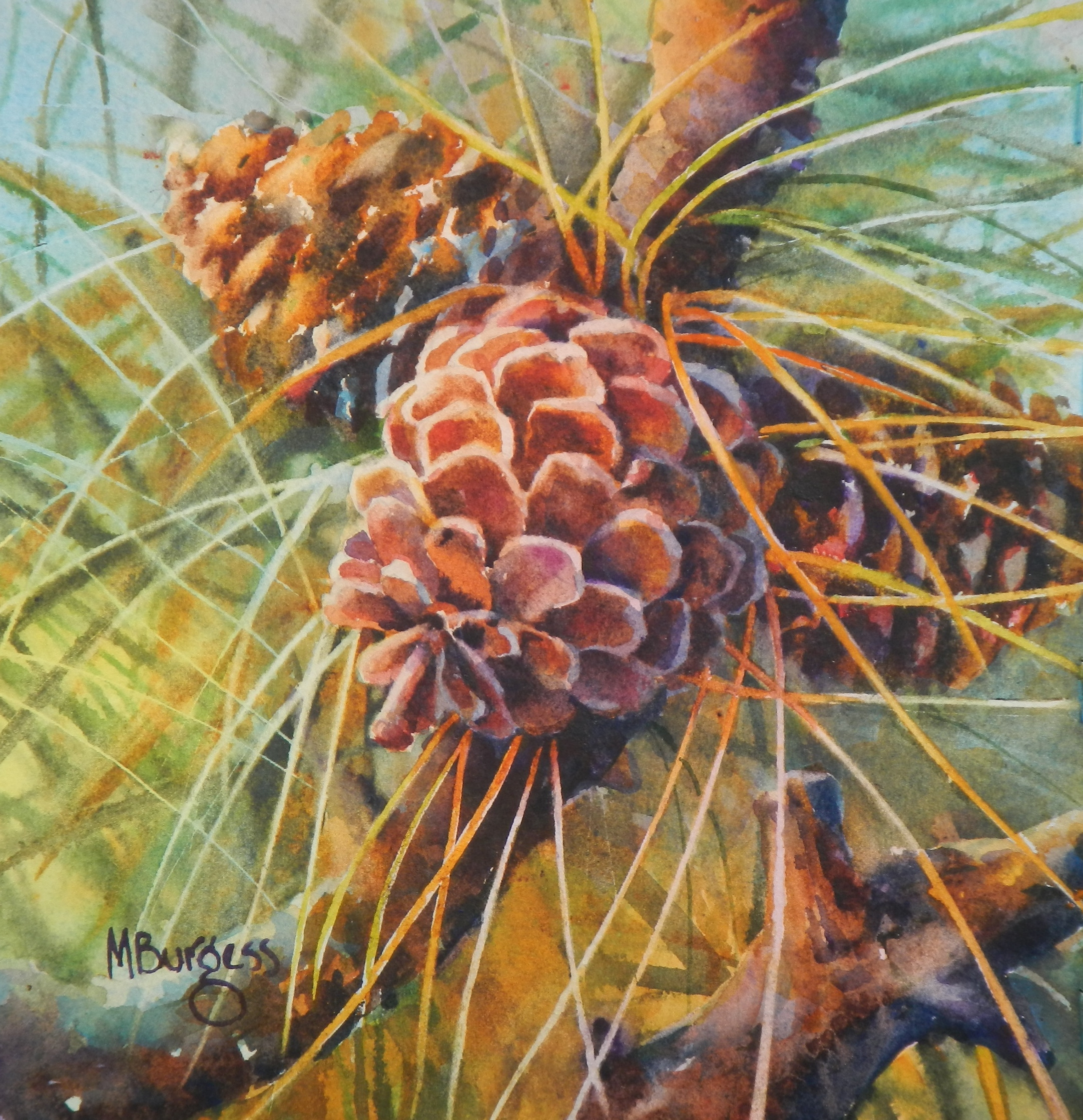 Burgess-Fruit of the Pine-Watercolor