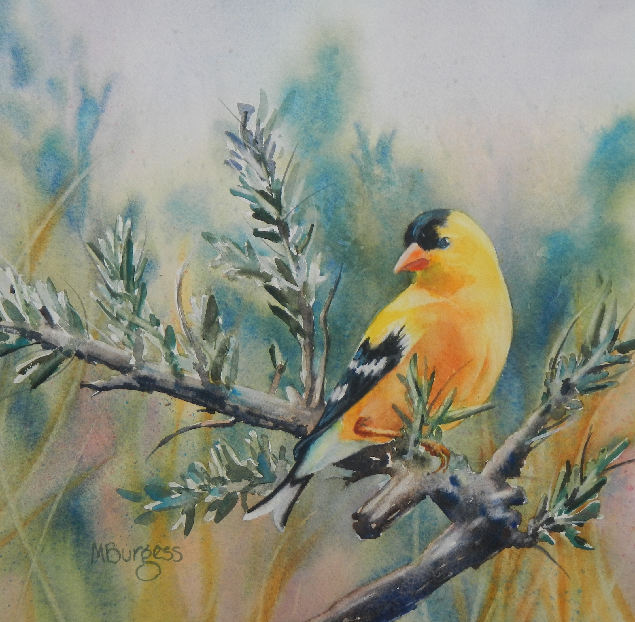 Burgess-Goldfinch and Sage-Watercolor