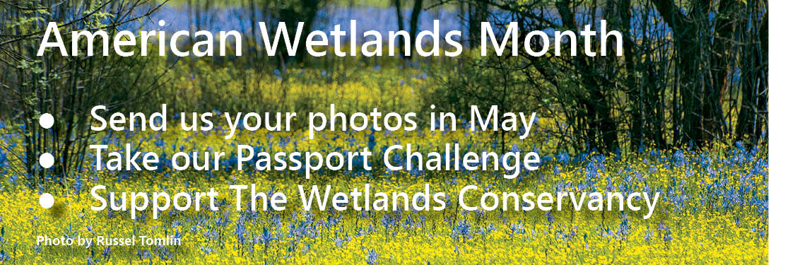 American Wetlands Month - get involved