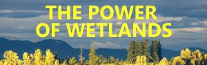 Power of Wetlands Banner